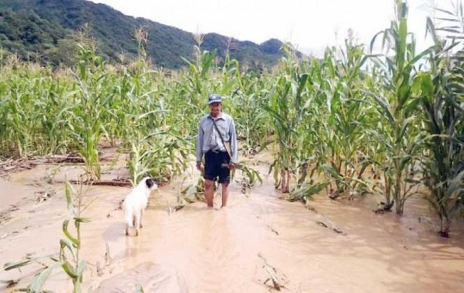 Municipio Poroma: 5 Familias quedaron sin viviendas y 132 perdieron su producción a consecuencia de riadas