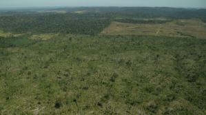 Grilagem-de-terras-Greenpaece